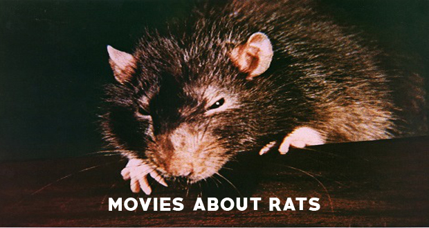 From the Archives – Some Films About Rats